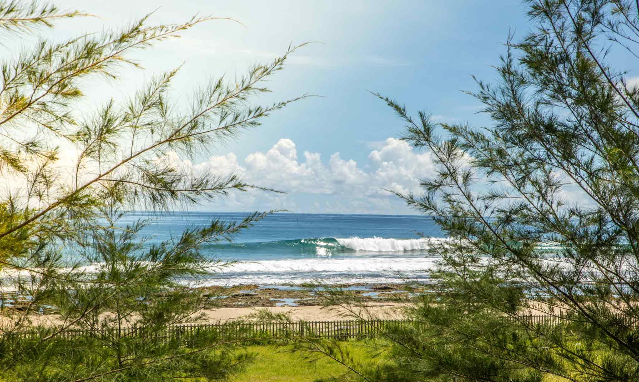 Mahi Mahi Waves 14