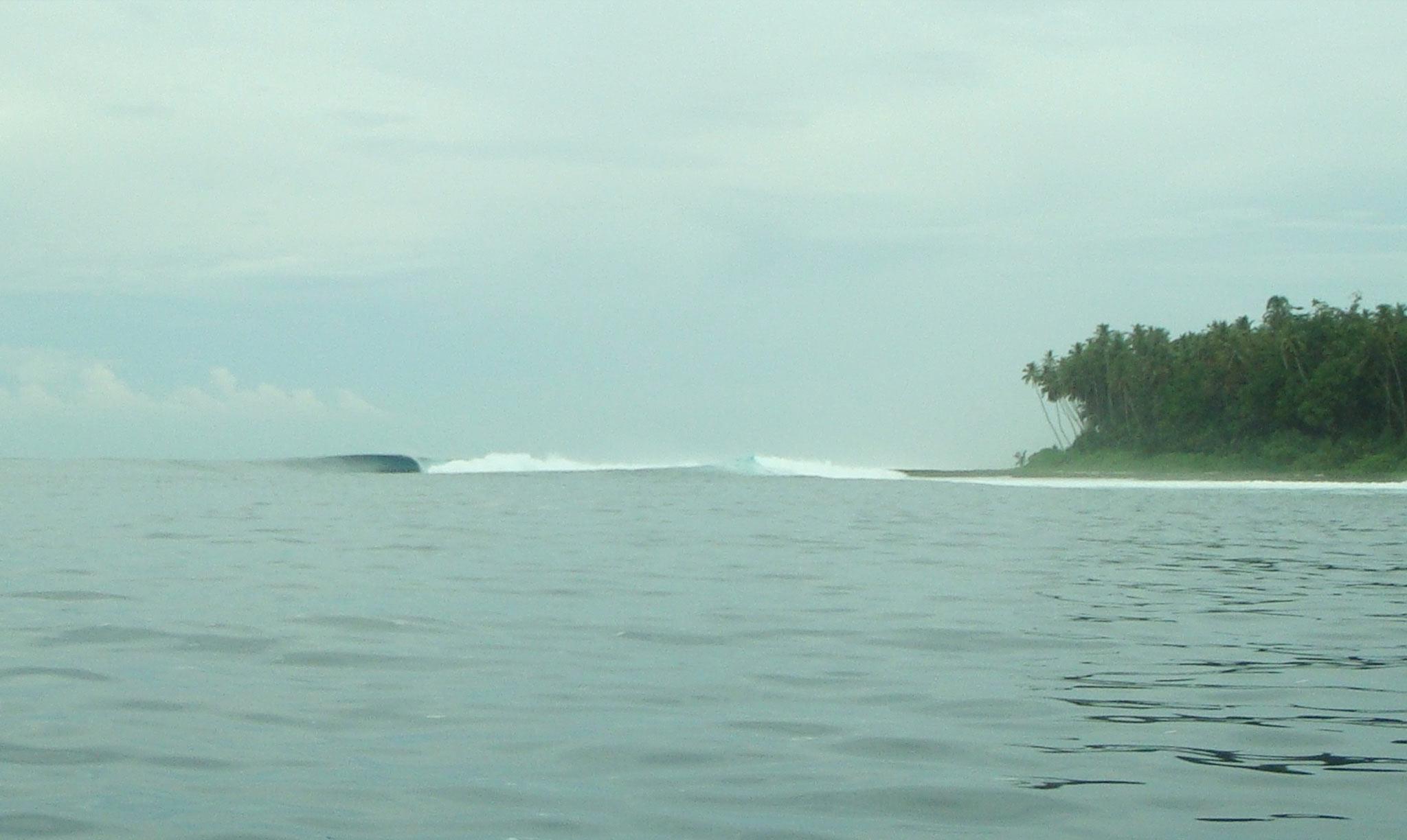 Mahi Mahi Waves 21