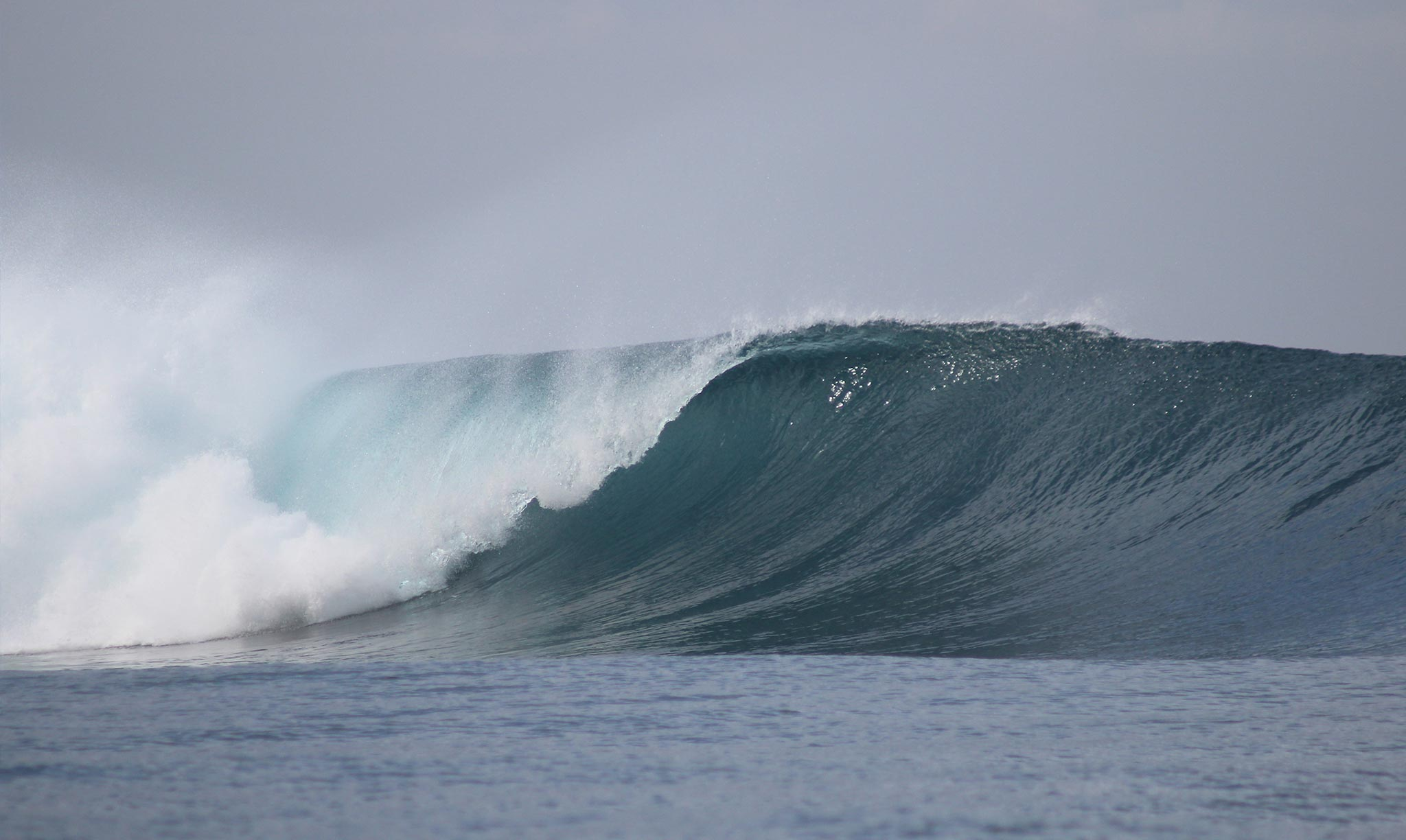 Mahi Mahi Waves 24